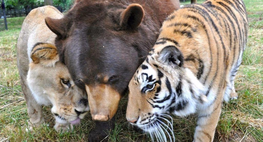 amistad entre animales y fisiomuro