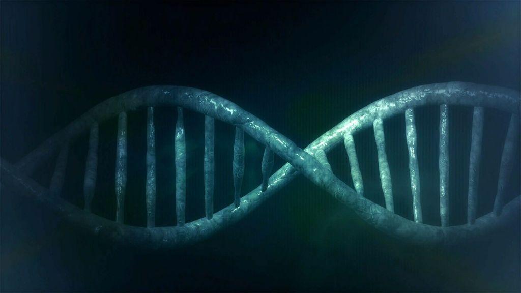 modificaciones geneticas y fisiomuro