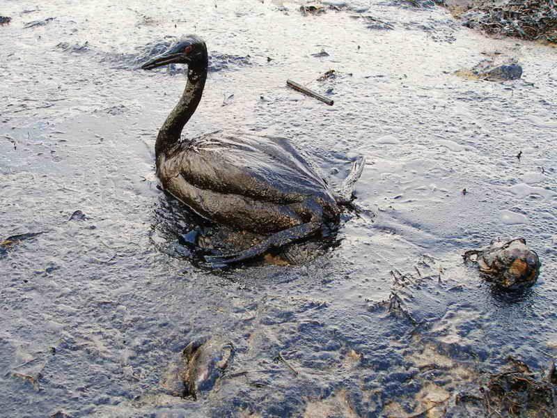 destruccion de los oceanos y fisiomuro