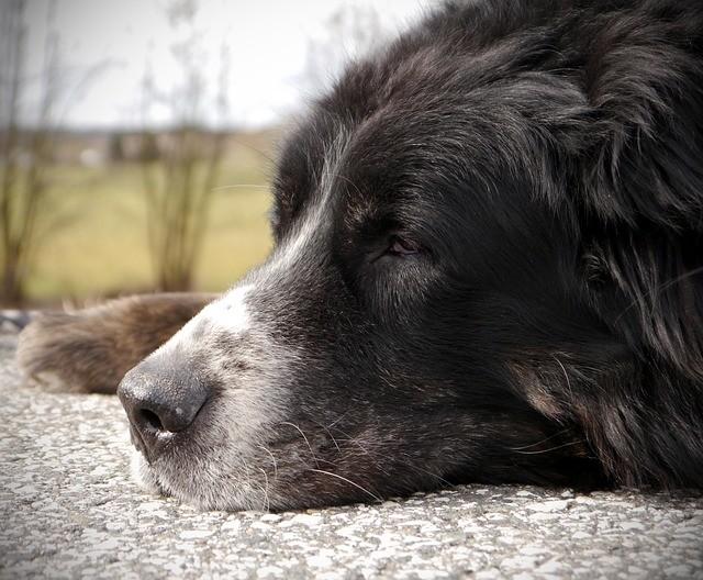fisiomuro y los canis lupus familiaris