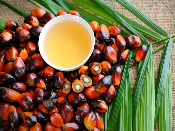 fisiomuro y el aceite de palma05