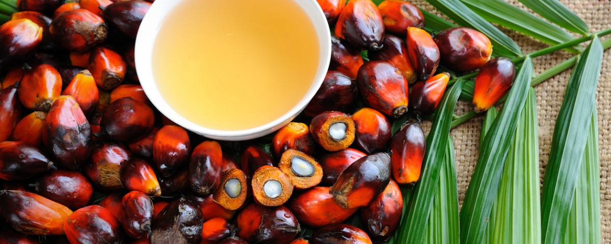 fisiomuro y el supervillano aceite de palma