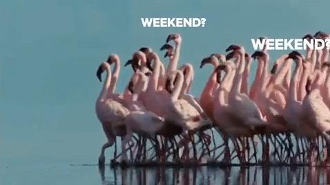 Fin de semana en fisiomuro